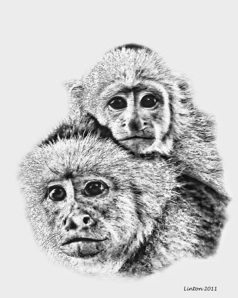 Digital Art - Capuchin Mother And Young by Larry Linton