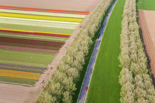 Photograph - Car On Road Near Tulip Fields, Holland by Peter Adams