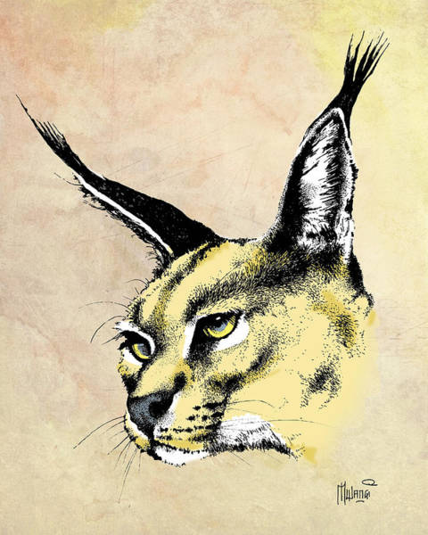 Craw Wall Art - Drawing - caracal Color by Anthony Mwangi