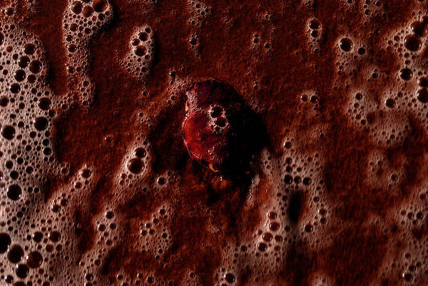 Photograph - Carapace 4 by Randal Bruck