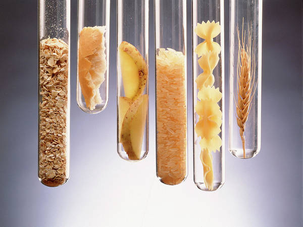 Wall Art - Photograph - Carbohydrate-rich Foods Presented In Test Tubes by Oscar Burriel/science Photo Library