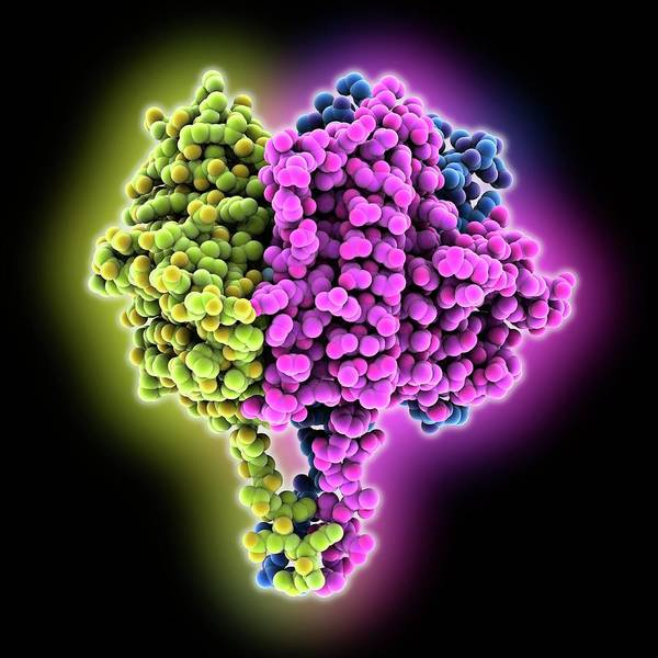 Biochemistry Photograph - Carbonic Anhydrase Molecule by Laguna Design