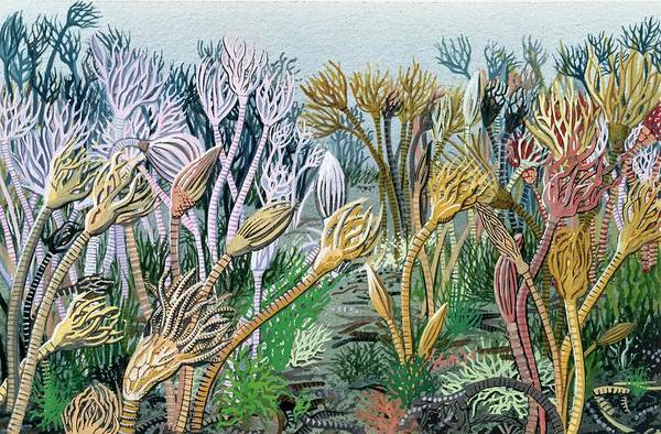 Invertebrate Photograph - Carboniferous Seascape by Natural History Museum, London/science Photo Library