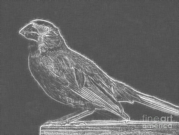 Avian Drawing - Cardinal Bird Glowing Charcoal Sketch by Celestial Images
