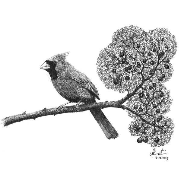 Cardinal Bird On Branch Art Print by Adam Vereecke