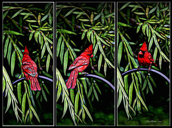 Photograph - Cardinal In The Willow by Ericamaxine Price