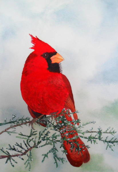 Painting - Cardinal by Laurel Best