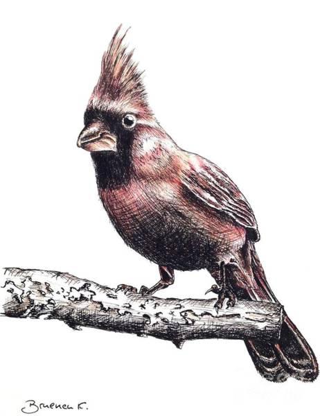 Red Cardinal Drawing - Cardinal Male by Katharina Filus