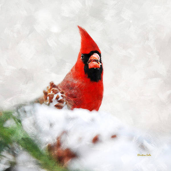 Cardinal Mixed Media - Winter Cardinal Square by Christina Rollo