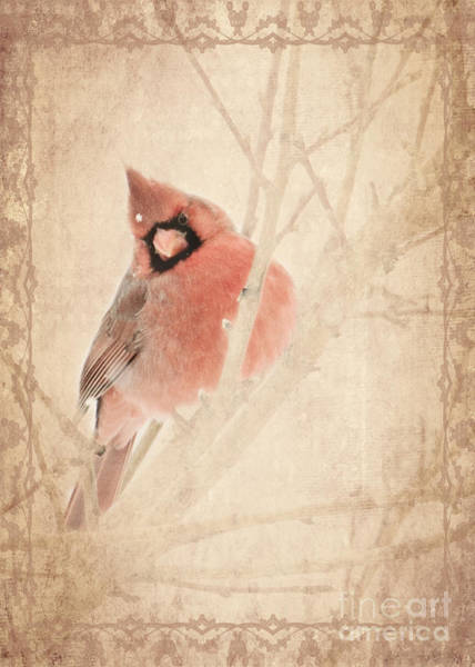 Photograph - Cardinal by Pam  Holdsworth
