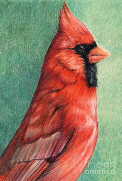 Red Cardinal Drawing - Cardinal Profile by Charlotte Yealey