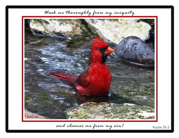 Photograph - Cardinal Wash by Carol Erikson