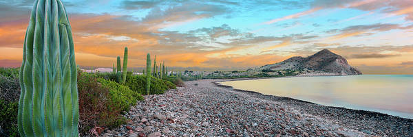 Sea Of Cortez Photograph - Cardon Cacti Line Along The Coast, Bay by Panoramic Images