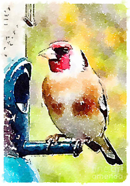 Painting - Carduelis Carduelis 'waterfinch' by Vix Edwards