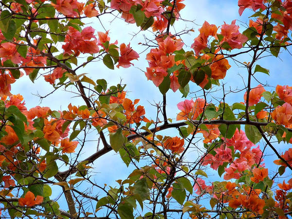 Photograph - Caribbean Flowers by Kimberly Perry