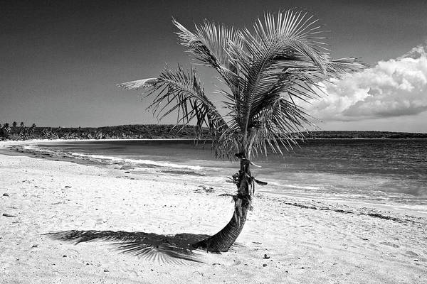 Wall Art - Photograph - Caribbean, Puerto Rico, Vieques by Jaynes Gallery