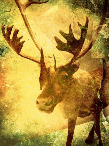 Photograph - Caribou Dreams by Richard Reeve