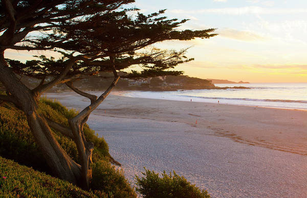 Wall Art - Photograph - Carmel, California, Cypress Tree by Bill Bachmann