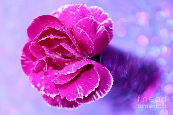 Carnation Photograph - Carnation Dream by Krissy Katsimbras