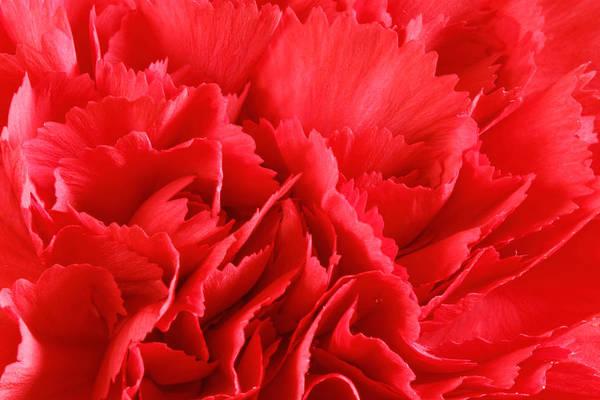 Photograph - Carnation Flowers by Peter Lakomy