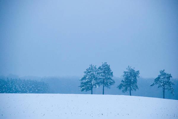 Photograph - Carolina Snow by Beverly Stapleton