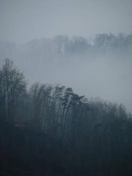 Photograph - Carolina Winter #1 by Jp Grace