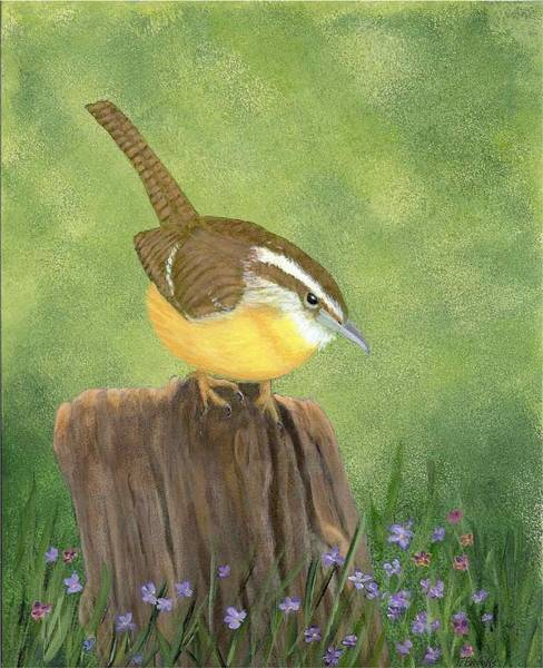 Carolina Wren Art Print
