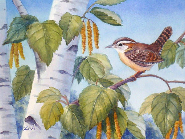 Painting - Carolina Wren In A Birch Tree by Janet Zeh