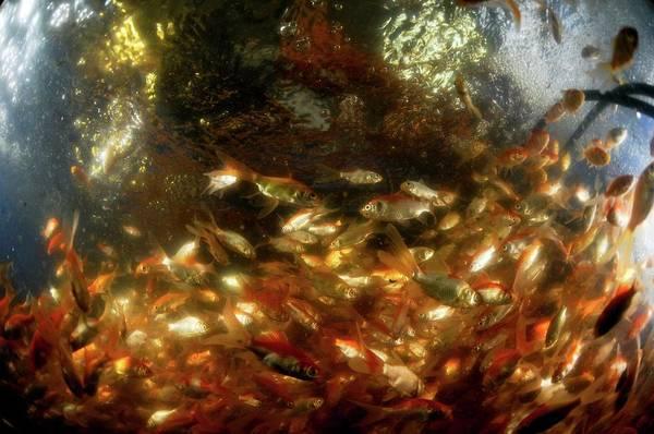 Kibbutz Photograph - Carp Fishery by Photostock-israel/science Photo Library