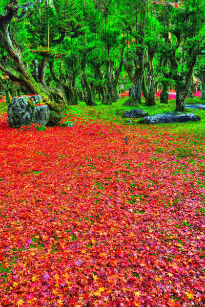 Fallen Tree Photograph - Carpet Of Love by Midori Chan