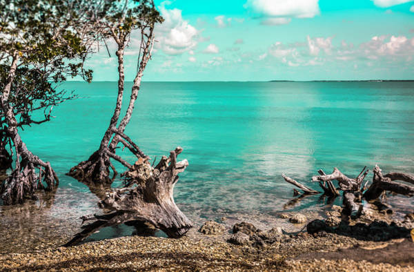 Wall Art - Photograph - Caribbean Living by Karen Wiles