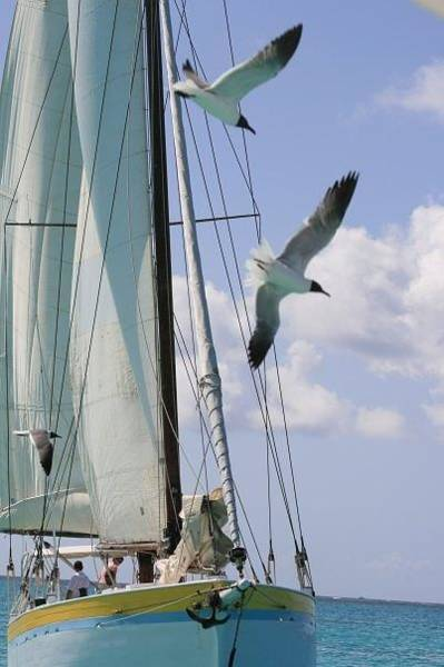 Photograph - Carribean Sail Boat by Debbie Cundy