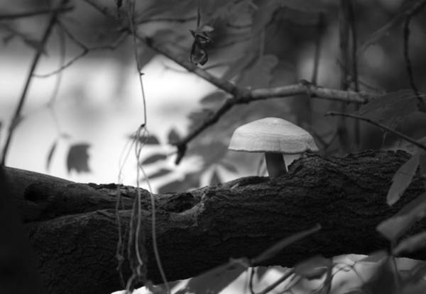 Mushrooms Photograph - Carry Me by Matthew Blum