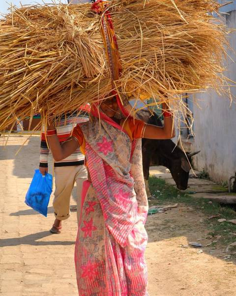 Photograph - Carrying The Hay - Allahabad India by Kim Bemis