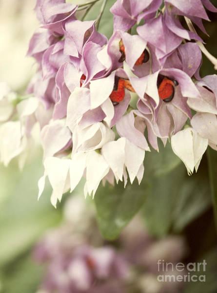 Wall Art - Photograph - Cascade Of Flower by Juli Scalzi
