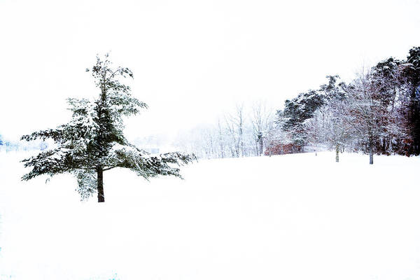 Photograph - Cascade Park Winter Tree by Evie Carrier