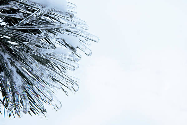 Photograph - Cascade Pine Icicles by Evie Carrier