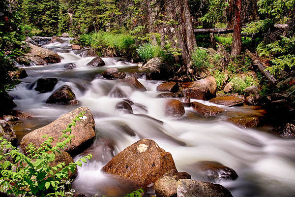 Photograph - Cascading Rocky Mountain Forest Creek by James BO Insogna