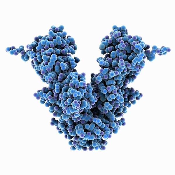 Biochemistry Photograph - Caspase-activated Dnase Molecule by Laguna Design