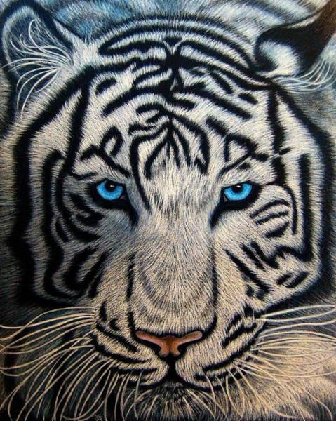Bengal Tiger Drawing - Casper by Jo Prevost