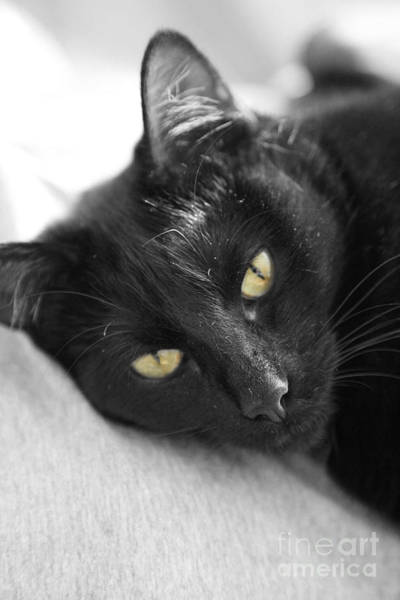 Black Cats Photograph - Caspian by Amanda Barcon