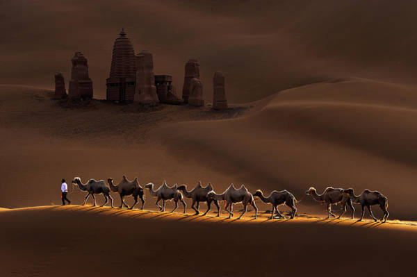 Columns Photograph - Castle And Camels by Mei Xu
