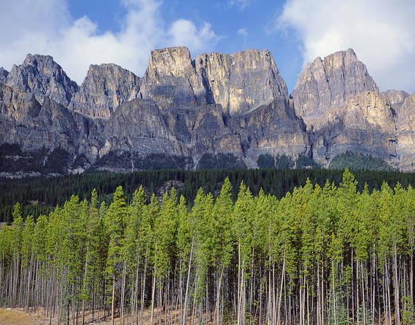 Photograph - 1m3337-castle Mountain by Ed  Cooper Photography