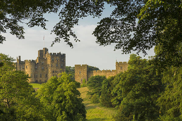 Northumbria Photograph - Castle Through The Trees by David Taylor