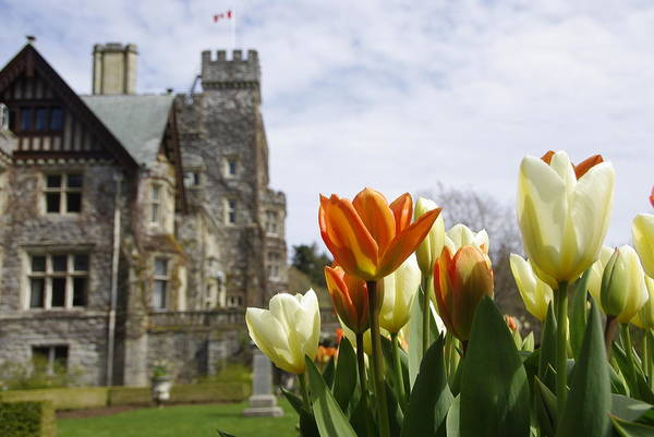 Castle Tulips Art Print