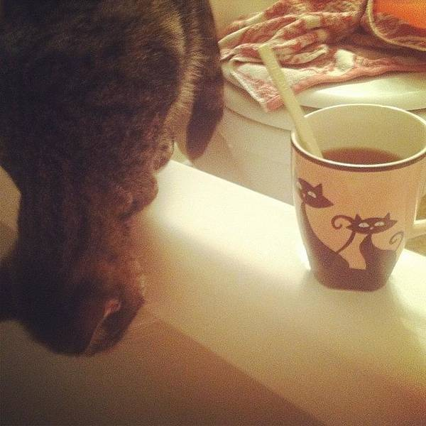 Photograph - Cat & A Cat Cuppa Tea 💕 by Mary Wilkinson