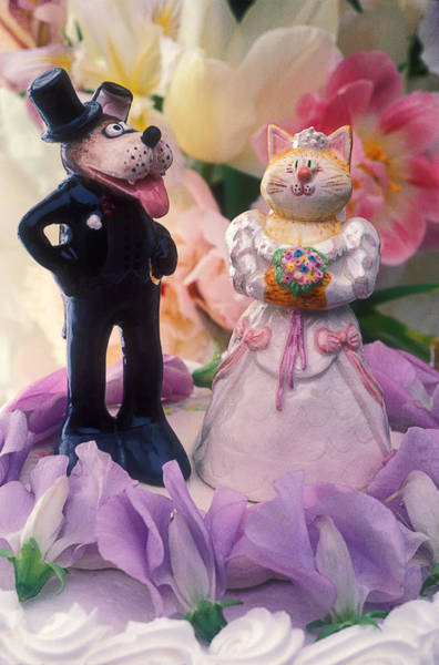 Wedding Cake Photograph - Cat And Dog Bride And Groom by Garry Gay