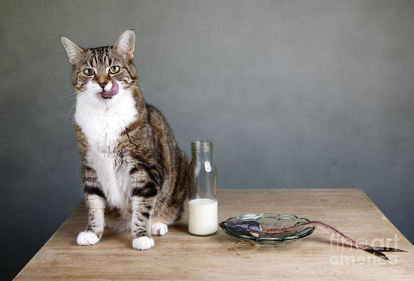 Wall Art - Photograph - Cat And Herring by Nailia Schwarz