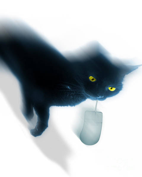 Photograph - Cat And Mouse by Edmund Nagele