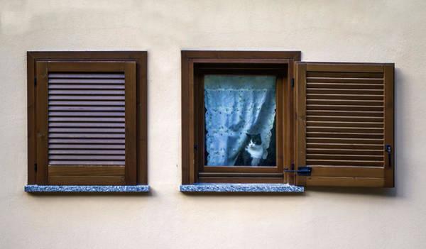 Photograph - Cat At The Window by Roberto Pagani